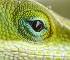 For those who may not ever think there is beauty in a lizard.... Surprise! There is beauty everywhere in Nature. Thank you God for your amazing creatures. Thank you Eddie Ledbetter for sharing your photo!