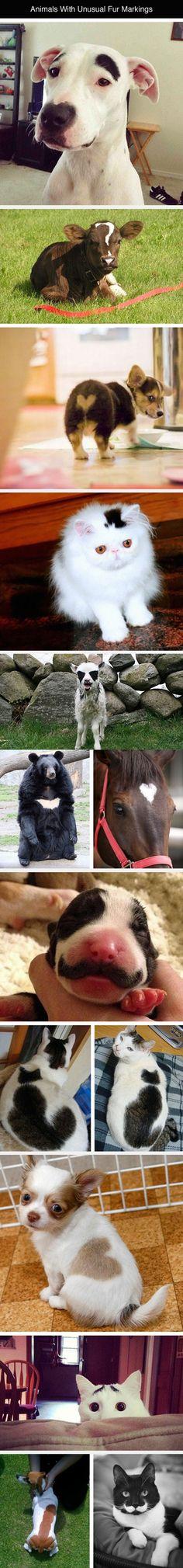 Unusual fur markings on animals