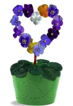love pansies