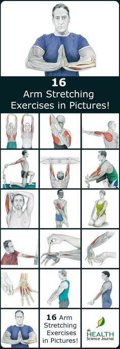 We have a new entry into our stretching series. Today we'll present 16 illustrations of arm stretching exercises, showing you exactly which muscle you are exercising. By demonstrating where on your body you should feel the highest tension, we hope to help lower back pain humor