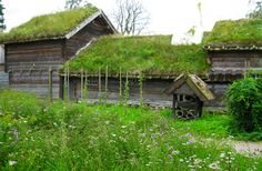 green+roof | green roof 1