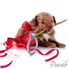 Puppy love http://paveb.com/