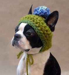 Adorable Crochet Dog Hat. I m so making this for my dogs.