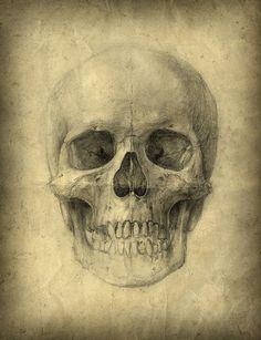 Yaroslav Gerzhedovich -Skull study sketch, pencil on paper
