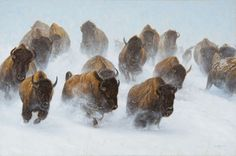 """Silent Thunder - John Banovich, Limited Edition Giclée Canvas  Gallery Edition: • 50 s/n plus 5 Artist Proofs • Canvas: 25"""" x 40"""" - $1,650 • Artist Proof - $1,980, I have studied the American Bison for nearly 30 years. What I have discovered, many times over, is when a herd of bison run through the fresh powdery snow all you hear is their breathing.  Their thundering hooves fall silent......."""