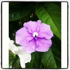 Flor en la mañana