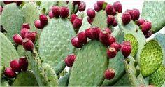 A flora brasileira é riquíssima em plantas com maravilhosas propriedades terapêuticas. Mas infelizmente a maioria das pessoas desconhece e desperdiça o poder das nossas plantas.