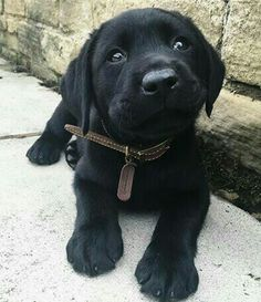 Awww i want this dog so bad