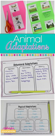 Animal adaptations are such a fun science unit to teach in upper elementary. Thi… - - Animal adaptations are such Third Grade Science, Elementary Science, Science Classroom, Upper Elementary, 4th Grade Science Lessons, 3rd Grade Science Experiments, Classroom Ideas, Primary Science, Primary School