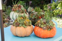 Design For Serenity – Our Succulent Topped Pumpkins!