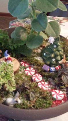 Christmas Fairy Garden- If my fairy garden were indoors, it would be decorated for Christmas. I love these peppermint stepping stones.