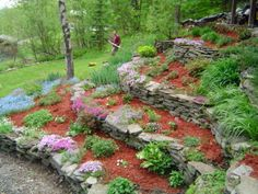 Terraced Vermont Garden, This is a picture of my terraced gardens in July 2009.  , This is a side view of the same garden in the early Spring of 2005.  I love all the ground Phlox and the light blue is forget me nots. , Gardens Design