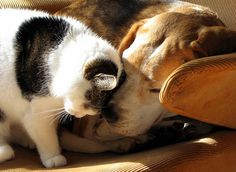 we are friends. #cat & #dog
