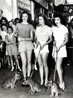 Jan Thomason, Wilma Morton and Beth Patton lead three baby tigers down a Miami street, 1946