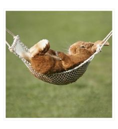Camden Graphics Photographic Bunny in a Hammock Card - Boots