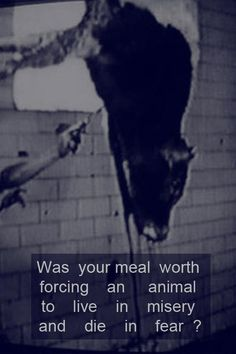 Was Your Meal Worth It?
