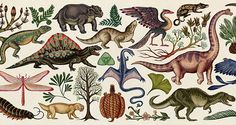 Illustrator Katie Scott shares the intricate working process involved in her new book on evolution.
