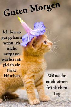 Good Morning Love, Akita, Cats, Animals, German, Good Morning Beautiful Images, Kawaii, Good Morning Thursday, Good Day