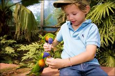 Bird park Avifauna - A world of birds Places Around The World, Around The Worlds, Park, This Or That Questions, Netherlands, Birds, Children, Dutch Netherlands, Boys