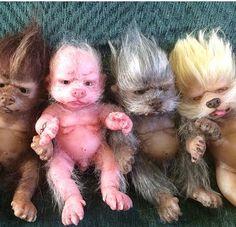 WerePups Pocket Pups