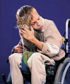 Gato na terapia assistida por animais