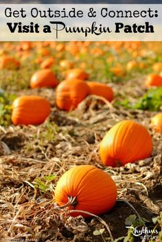 Going to a pumpkin patch is a classic fall activity for school trips and fun family adventures. Find a pumpkin patch near you to visit this fall!