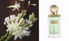 THE ORIFLAME FRAGRANCE MAP Parfum Sublime Nature Tuberose oriflame-anni.gr