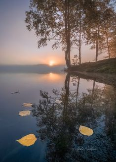 Reflection Photography, Life Photography, Great Photos, Cool Pictures, Misty Dawn, Quelques Photos, Flower Wallpaper, Nature Animals, Science And Nature
