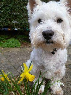 Louise Pyper's dog Angus #PreciousPet of #April #PoM