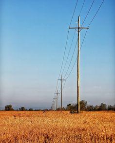 Power lines. Williamston MI.  #photography #photo #scenic #beautiful #landscape #sunrise #Michigan #puremichigan #outdoors #travel #nature #soybeans