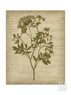 Romantic Pressed Flowers IV Print