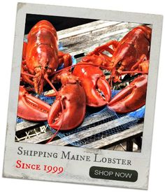 Live Maine lobster delivery since 1999. Order lobster online from LobsterAnywhere - Maine lobster tails, lobster chowder, lobster rolls, and lobster meat.