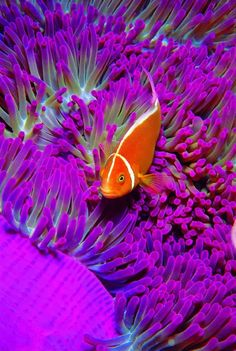Sea Life in Orange and Purple
