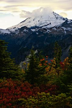 Mount Baker with Fall Colors could see this from our back yard, for ten years Washington Mountains, Washington State, Rocky Mountains, Nature Pictures, Cool Pictures, Beautiful Pictures, Amazing Photos, Beautiful World, Beautiful Places