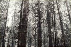 "Robin Cole Smith | ""The Sentinels"" | Gallery 1261 :: Denver, Colorado"
