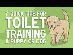7 Quick Tips For Toilet Training A Puppy Or DogToilet training a puppy or older . 7 Quick Tips For Toilet Training A Puppy Or DogToilet training a puppy or older dog can be time consuming and frustr Puppy Potty Training Tips, Training Your Dog, Dog Toilet, Dog Commands, Dog Potty, Dog Books, Thing 1, Toilet Training, New Puppy