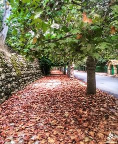 Autumn looks amazing in Sawfar By Sarar Hilal #WeAreLebanon  #Lebanon #WeAreLebanon