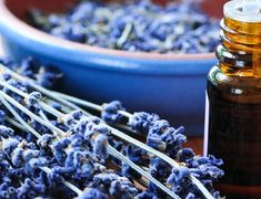 Still learning about essential oils? Come see Catherine Truman's top 10 essential oils for the beginner. Homemade Essential Oils, Essential Oils 101, Young Living Essential Oils, Natural Treatment For Anxiety, Natural Treatments, Natural Remedies, Essential Oil For Hemorrhoids, Calming Oils, Organic Shampoo