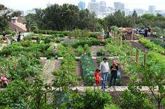 Oranjezicht City Farm Urban Agriculture, Urban Farming, City Farm, Market Garden, Farm Life, Cape Town, Vegetable Garden, Farms, Homesteading