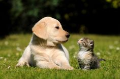 How good are cats and dogs at remembering their everyday lives?