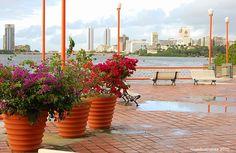 """Recife, just after the rain ... - Recife, Pernambuco +  Caminhos do Recife . Criado por Julio Brunet Rocha e Christian Perez.  Música: """"Paradise"""" por Coldplay vídeo 4m : 44s = https://www.youtube.com/watch?v=6Z6wI24bDaA + Novo bairro da Reserva do Paiva, ao Sul do Recife, caminho verde e mais curto para Gaibu e Porto de Galinhas.  Música:  """"Shangri-La"""" por Joyce & Tutty Moreno Vídeo 6m : 34s = https://www.youtube.com/watch?v=NG6N9hg2F9E"""
