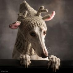 $29.99 FREE SHIPPING USA. WINTER-KNIT-DOG-HAT-HOODIE-SNOOD-COWL-SCARF-ANTLER-DEER-TASSEL-GREYHOUND-WHIPPET S-M-L ASSORTED COLORS.