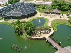 Mangal das garças Belém do Pará