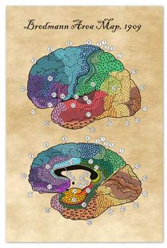 The Hubbard Foundation Brain Study