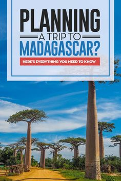 Madagascar the perfect destination in Africa for the adventures traveler and travelers that want to get away from mass tourism and want to see wildlife and nature. #madagascar #africa #travel #blogger