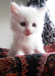 Can I please have this cat?!
