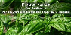Wie Du dein Basilikum richtig anpflanzt, pflegst, erntest & lagerst (Inklusive Low Carb Rezepte Tipps)