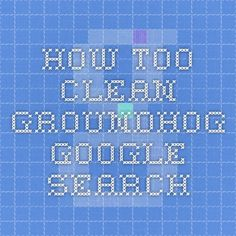 how too clean groundhog - Google Search