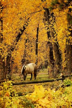 Horse in an autumn forest.