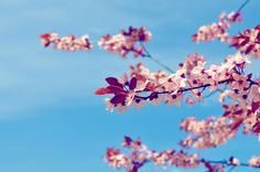 #spring is almost here :)